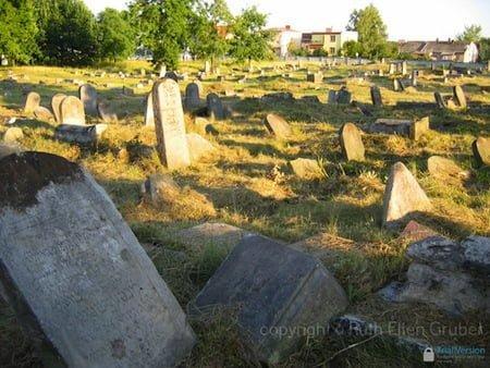 General view of Bialystok Bagnówka cemeterty. Photo © Ruth Ellen Gruber