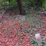 Kerepesi Jewish cemetery. Holocaust section