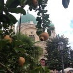 The dome of the synagogue in Florence, Italy, framed by pomegranates -- a symbol of the new year -- on some of the many pomegranate trees in the synagogue garden