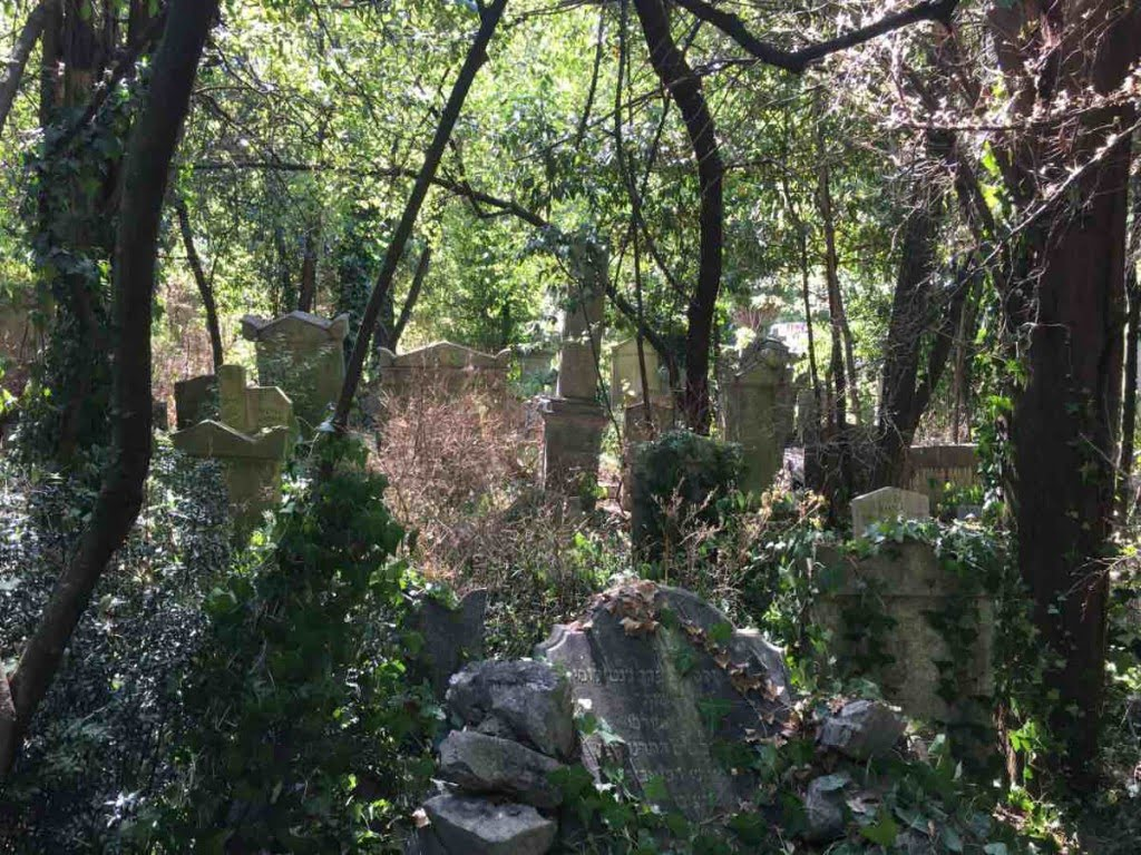 The jungle of the Jewish cemetery in Trieste. Photo: Hanno Loewy
